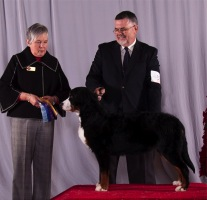 Emelia at the Ottawa Kennel Club Show