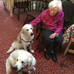 Therapy dogs 'Sadie' & 'Dugan' joining Etheleen Stanzel for her 100th birthday at the Riverview Seniors' Residence