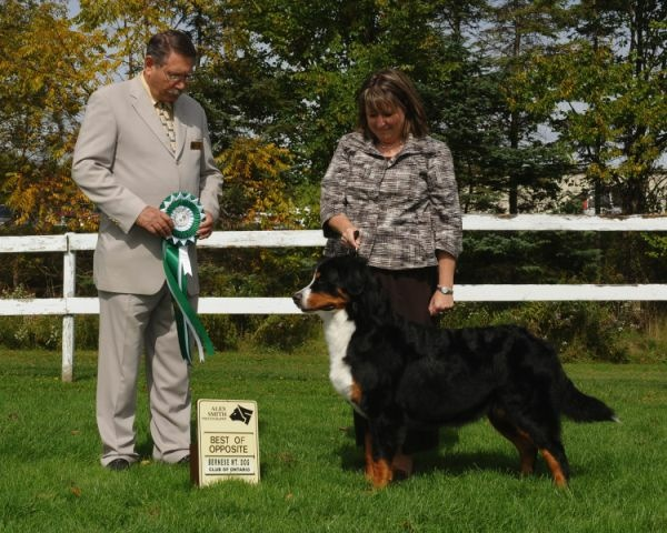 Sina winning Best Opposite Sex at the Bernese Mountain Dog Club of Ontario Specialty Show
